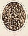 Aberdeen Portraits No. 1 MET DP259496.jpg