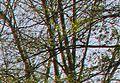Aberration chromatique 02.jpg