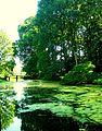 Achtertuin - Monumentnummer 515703 - Oud-Poelgeest.JPG