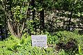 Admont-Weng - Naturdenkmal 958 - Kataraktstrecke der Enns - II.jpg