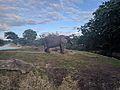 African Elephants (31664357052).jpg