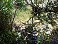 Agua estancada - panoramio.jpg