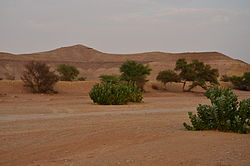 Al-'Uyayna is a village in central Saudi Arabia