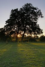 Alder trees by the Beaulieu River at Longwater Lawn.jpg