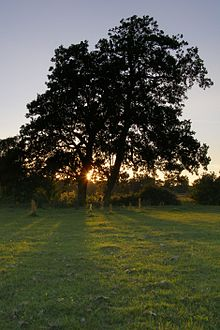 220px-Alder_trees_by_the_Beaulieu_River_at_Longwater_Lawn.jpg