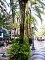 Alicante - Paseo de la Explanada de España 06.jpg