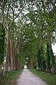Allée platanes château de Gizeux.jpg