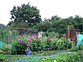 Allotments - geograph.org.uk - 954867.jpg
