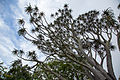 Aloe Tree, Cape Town, South Africa-3551.jpg