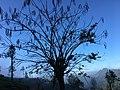 Along Tree.jpg