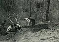 Am Tendaguru - Leben und Wirken einer deutschen Forschungsexpedition zur Ausgrabung vorweltlicher Riesensaurier in Deutsch-Ostafrika (1912) (17544604873).jpg