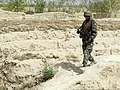 An Afghan National Army soldier with the 1st Brigade, 205th Corps patrols during operations in Sperwan, Panjwai district, Afghanistan, April 1, 2012 120401-A-OR326-020.jpg