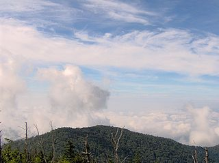 Andrews Bald mountain in United States of America