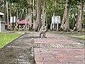 Anduki Recreational Park (8).jpg