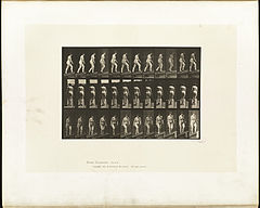 Animal locomotion. Plate 86 (Boston Public Library).jpg