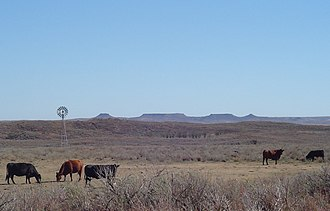 Black Kettle National Grassland - A scene of the Black Kettle region with the Antelope Hills in the background. The shinnery oak brush (Quercus havardii)  in this picture is typical of sandy soils