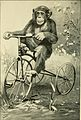 Apes and monkeys; their life and language (1900) (14770730371).jpg