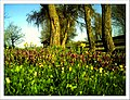 April Frühling Parc Natural Mundenhof Freiburg - Master Botany Photography 2013 - panoramio (1).jpg