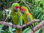 Ara macaws -Jurong Bird Park -two species-8a.jpg