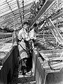 Arbeiders aan het werk met het besproeien van planten in de kas van de fa. Baard, Bestanddeelnr 190-0673.jpg