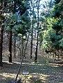 Arborétum Felaťa3.JPG