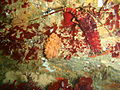 Arborescent bryozoans and West coast rock lobster at site of Umhlali wreck PA171935.JPG