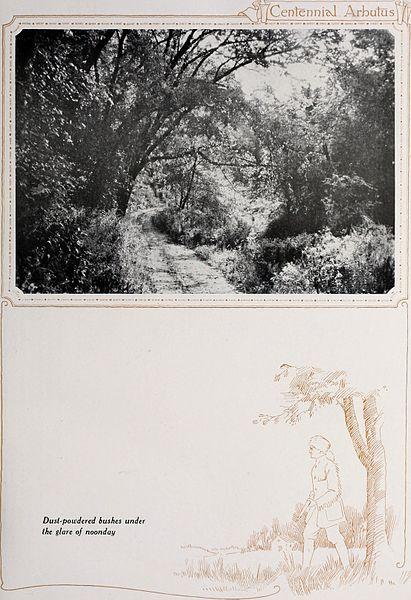 File:Arbutus (1921) (14763182254).jpg