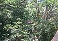 Area Kantor Pemkot Cimahi - panoramio.jpg