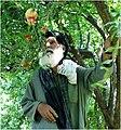 Arghandab district fruit farmer.jpg