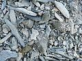 Ariocarpus scapharostrus (5727042897).jpg