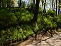 Arkadijas parks - panoramio (10).jpg
