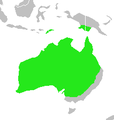 Artamus cinereus-map.png