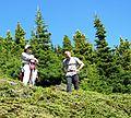 Ascending Mount Townsend - Flickr - brewbooks.jpg