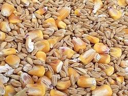 Assorted grains.jpg