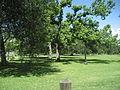 AudubonParkWalnutJune08.jpg