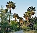 Audubon Sable Palm Sanctuary - panoramio.jpg