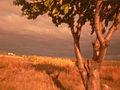 Autumn - 74 (2009). (16519356405).jpg