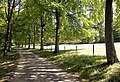 Avenue of Trees - geograph.org.uk - 204481.jpg