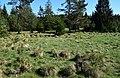Bärnauer Moorgebiet.jpg