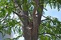 Baby robins waiting for food (42817048531).jpg