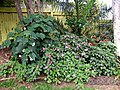 Backyard Garden Scene (23464379956).jpg