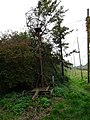 Bailleul les houblonnières, Hommelpap (10).jpg