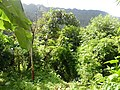 Baitadi, Nepal - panoramio (3).jpg