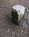 Balade en forêt d'Évreux 009.jpg