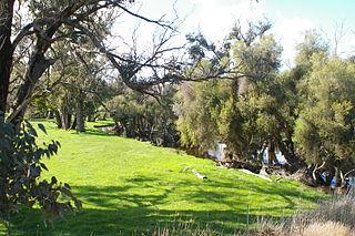 Balgarup River river in Australia