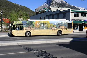 Roam (public transit) - Each Roam bus is decorated with images of different animals from the National Park. This one is Elk