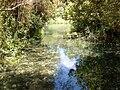 Banias River01.JPG
