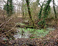 Barton Stacey - Waterlogged Woods - geograph.org.uk - 654624.jpg