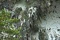 Bau N. northiana habitat 4.jpg
