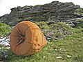 Beached buoy at Port an Luig Mhòir - geograph.org.uk - 891596.jpg